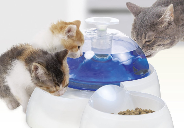 Top 10 Best Cat Water Fountains in 2020 Reviews